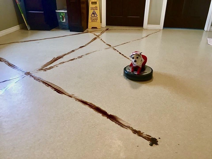 robot-vacuum-cleaner-spreads-dog-shit-everywhere-7